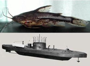 Do you see a resemblance? Top: Amblydoras monitor (courtesy scotcat.com). Bottom: a model of the USS Monitor.
